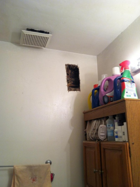 Bees nest in wall?-image_1476401581940.jpg