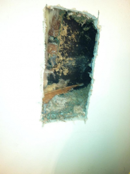 Bees nest in wall?-image_1476401749915.jpg