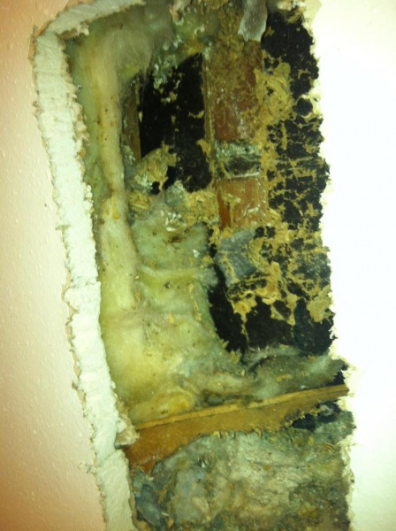 Bees nest in wall?-image_1476401798138.jpg