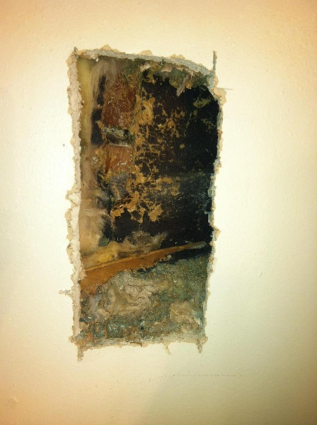 Bees nest in wall?-image_1476401853340.jpg