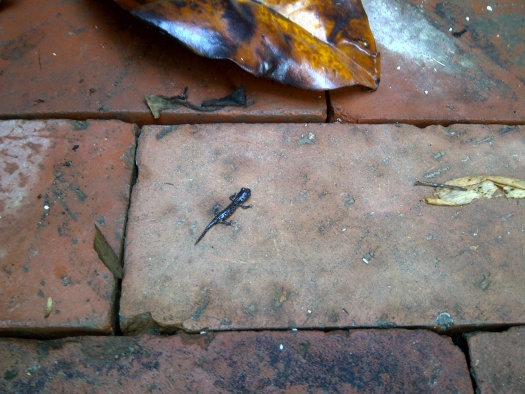 Help! What the hell is this creature? Found many in backyard-img-20121203-01213.jpg