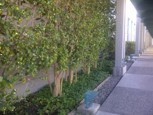 What is this fragrance shrub?-img-20130904-01971.jpg