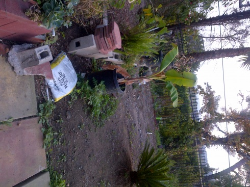 Backyard - Landscaping-img-20140209-00098.jpg