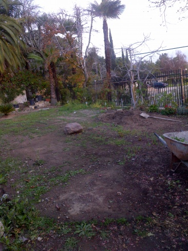 Backyard - Landscaping-img-20140209-00099.jpg