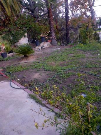 Backyard - Landscaping-img-20140209-00101.jpg