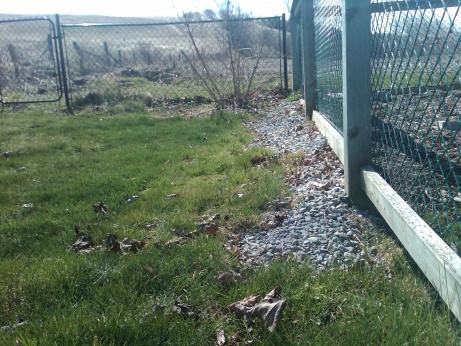 Advice on slope next to house needed-img00018-20120412-1120.jpg