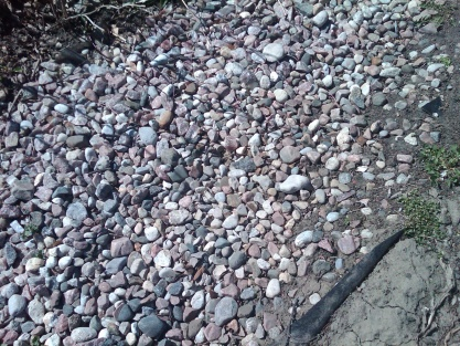 Advice on slope next to house needed-img00021-20120412-1150.jpg