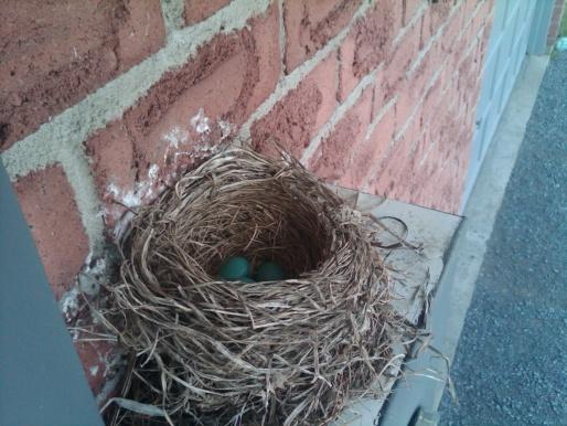 nesting-img00063-20120422-1118.jpg