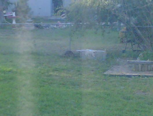 Cat trap fever-img00080-20090518-1910.jpg