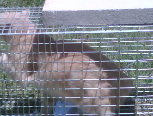 Cat trap fever-img00084-20090519-1206.jpg