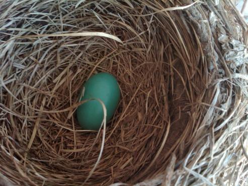 nesting-img00089-20120429-1057.jpg