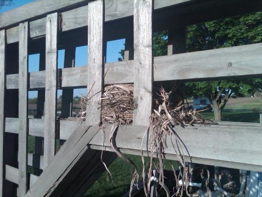 nesting-img00121-20120519-0724.jpg