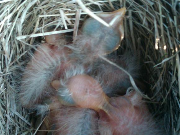 nesting-img00159-20120523-1921.jpg