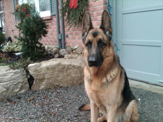 Dog Heaven-img00186-20111205-1031-1-.jpg