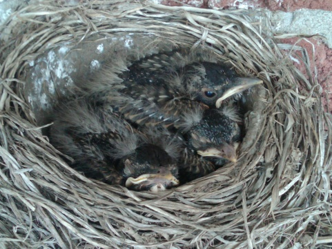 nesting-img00227-20120603-1112.jpg