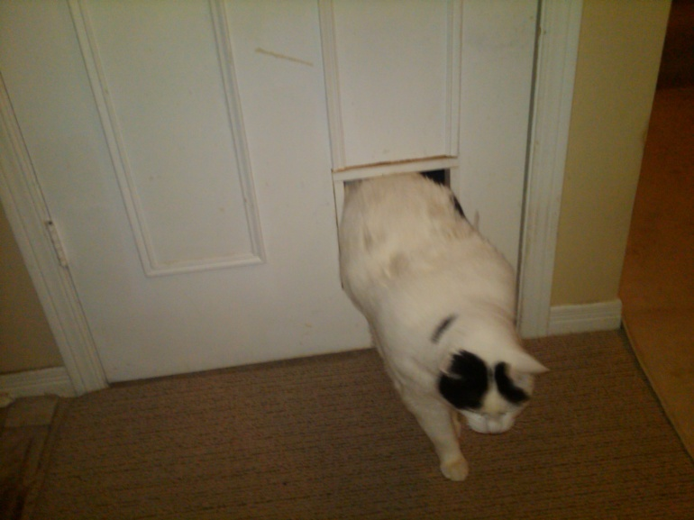 cat flap/pet access door on a standard interior panel door ...