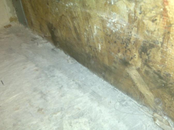 Black mold on plywood subfloor-img00414.jpg