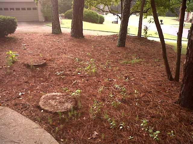 My lawn-img00663-20110713-0831.jpg