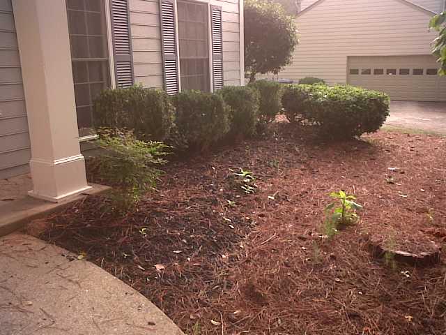 My lawn-img00664-20110713-0832.jpg
