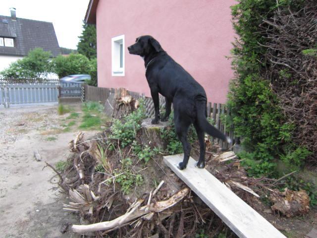 German House Rebuild-img_0038.jpg
