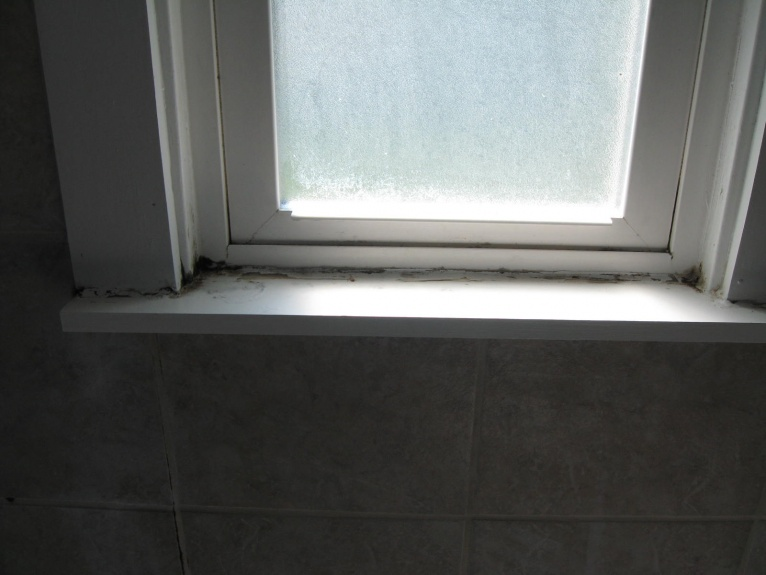 Exceptional ... Window In Bathroom Shower: MOLD Img_0192