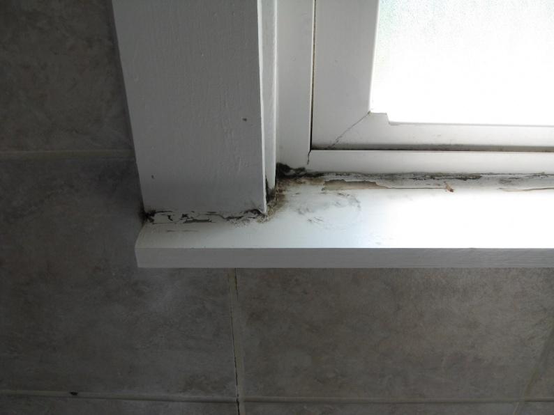 Bon ... Window In Bathroom Shower: MOLD Img_0195 ...