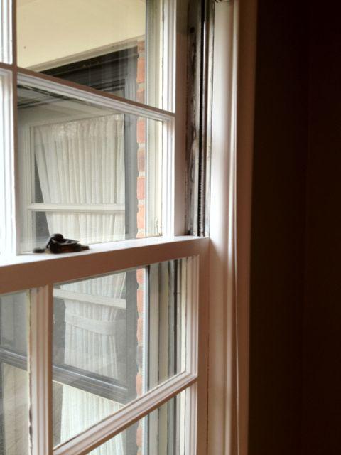 Squeaky windows-img_0344.jpg