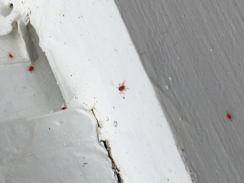 Clover Mites Pest Control Diy Chatroom Home