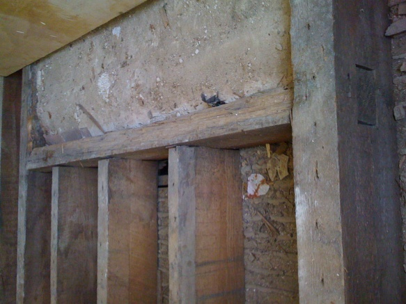 Sister joist, replace wood bean, what wood grain?-img_0439.jpg