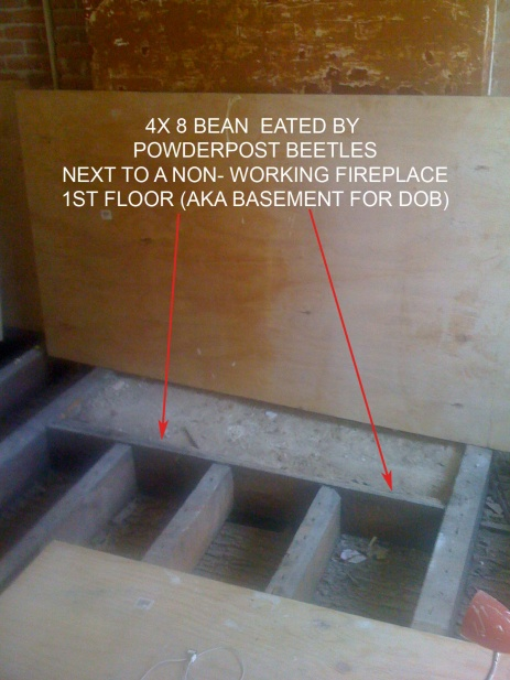 Sister joist, replace wood bean, what wood grain?-img_0444b.jpg