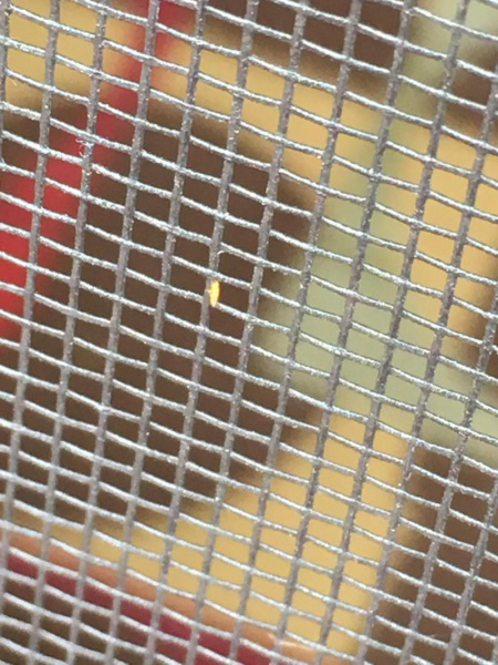 Tiny orange biting bugs...have picture, help!-img_0452_1497729074717.jpg