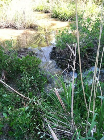 Dam Beavers-img_0495.jpg