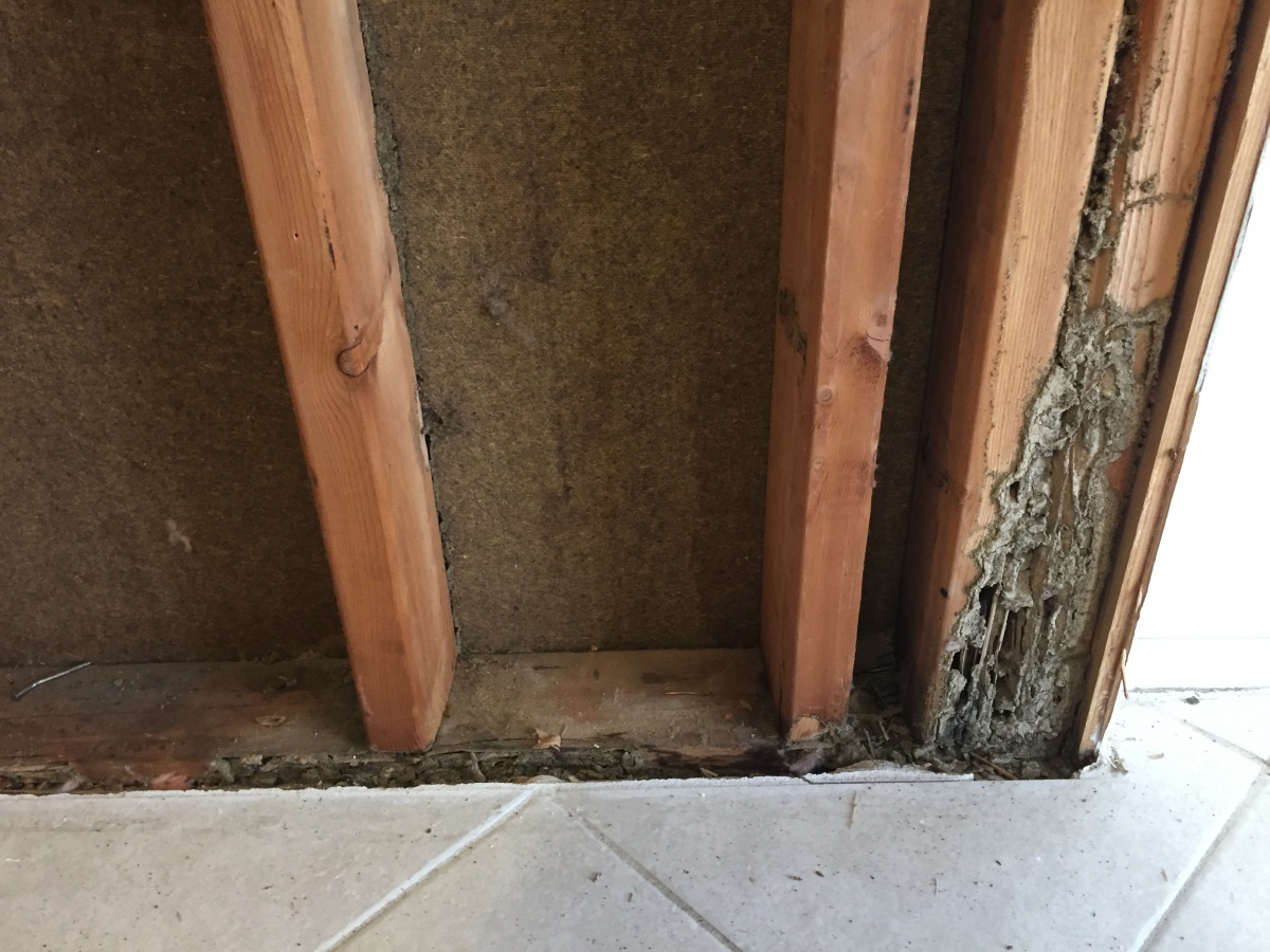 Need Advice On Replacing Studs For Termite Damage