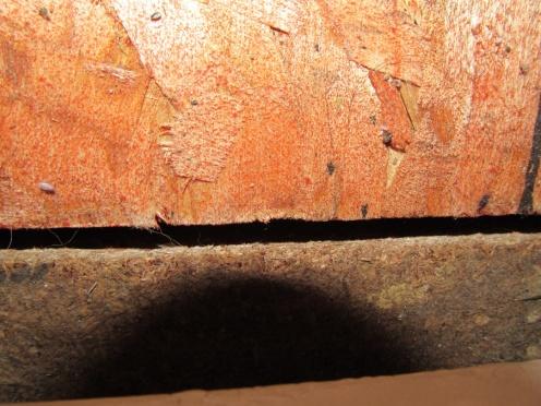 sealing edges of subfloor-img_0611.jpg