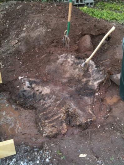 """Rent a stump grinder or """"hire"""" a stumpgrinder?-img_0637.jpg"""
