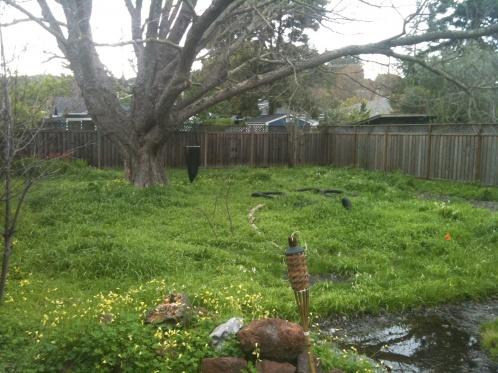 Help with overgrown backyard!!!-img_0648.jpg
