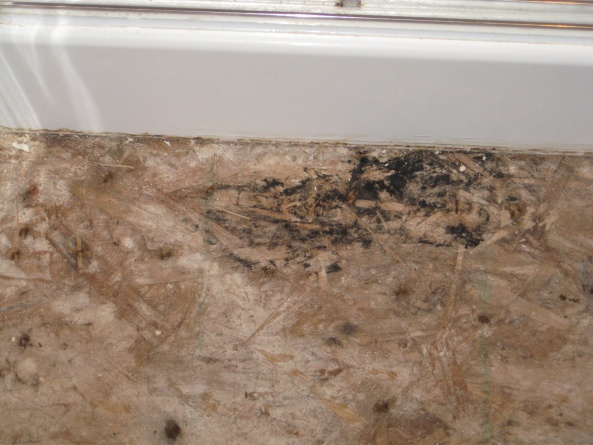 Just Took up my master bath Floor Help!!-img_0671.jpg
