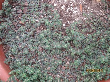 Weed control again.-img_0740.jpg