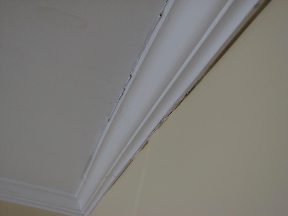 Need some water damage repair advice-img_0831.jpg
