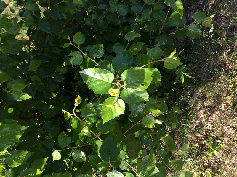 What kind of plant is this?-img_0956.jpg