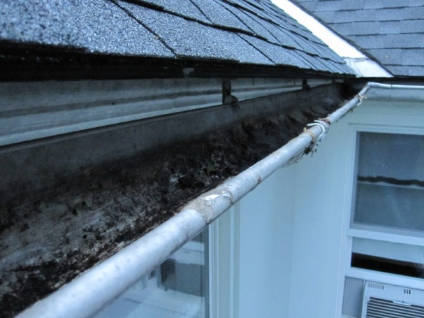 Gutters and Decorative Trim on Fascia-img_1180_resize.jpg