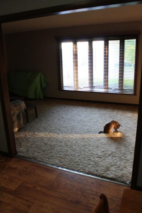 Help furnishing front living room.  I'm lost.-img_1291.jpg