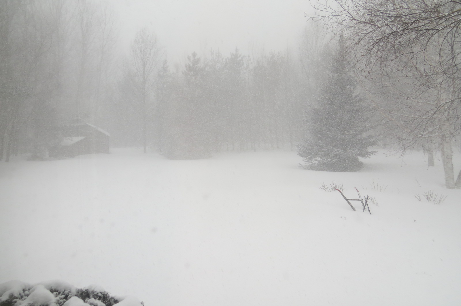 Oh Goody - It's March-img_1333.jpg