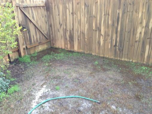 Help solve yard drainage issue-img_1361.jpg