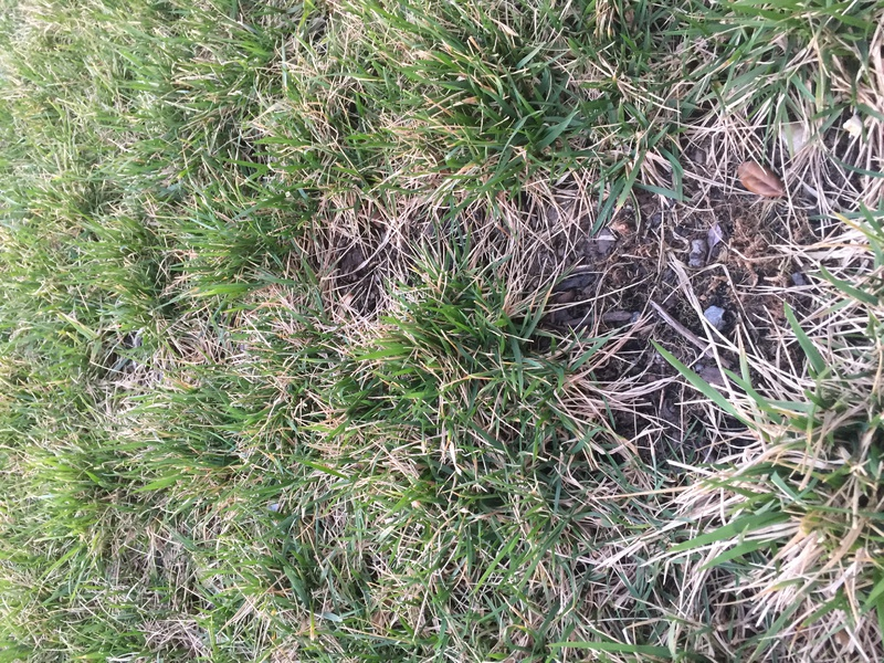 What kind of Grass and stopping Crabgrass-img_1500.jpg
