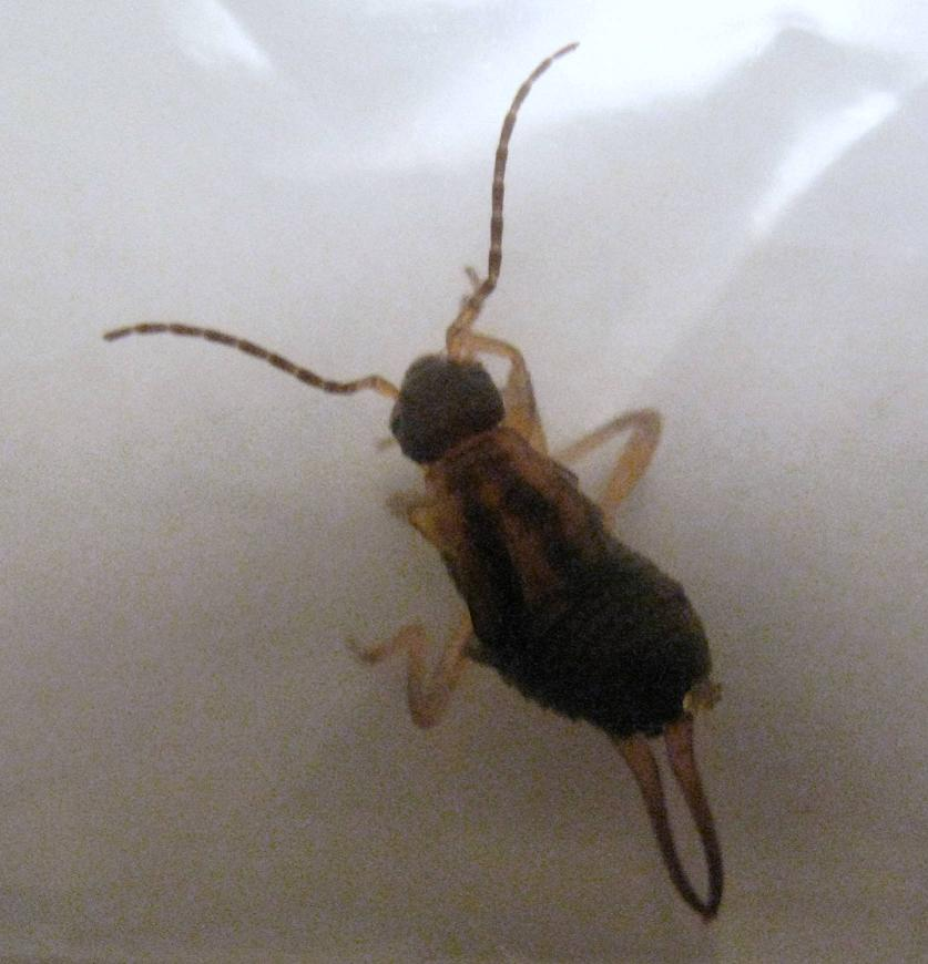 Is this a Termite?-img_1750.jpg
