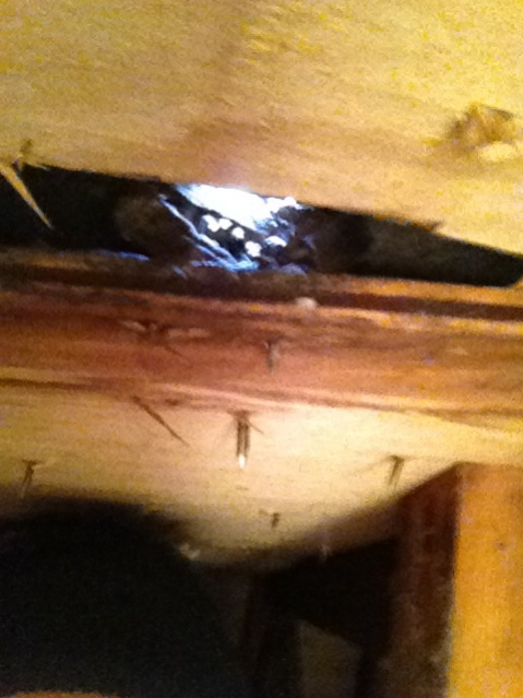 Roof problems - warped boards.-img_1892.jpg