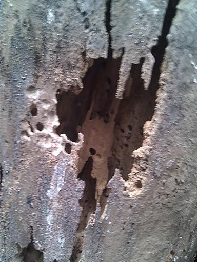 Is this Termites?-img_20110724_155631.jpg
