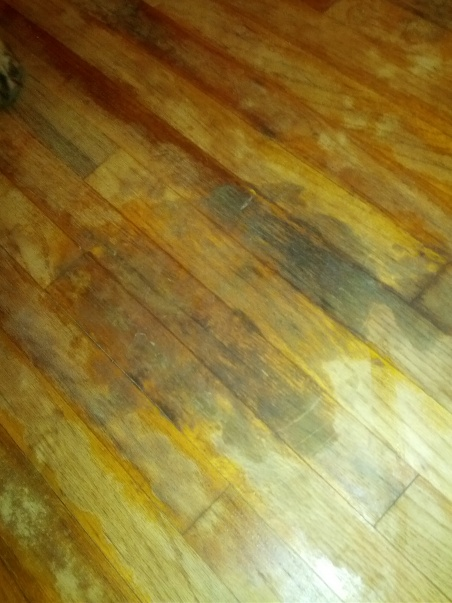 Hardwood Flooring Diy Chatroom