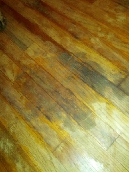 Mold(?) in Hardwood-img_20121110_191526-1-.jpg ... - Mold(?) In Hardwood - Flooring - DIY Chatroom Home Improvement Forum